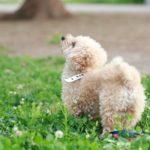 迷い犬を拾ってから飼い主さんが見つかるまでの経緯と、マイクロチップ「AIPO」「FAM」の違い